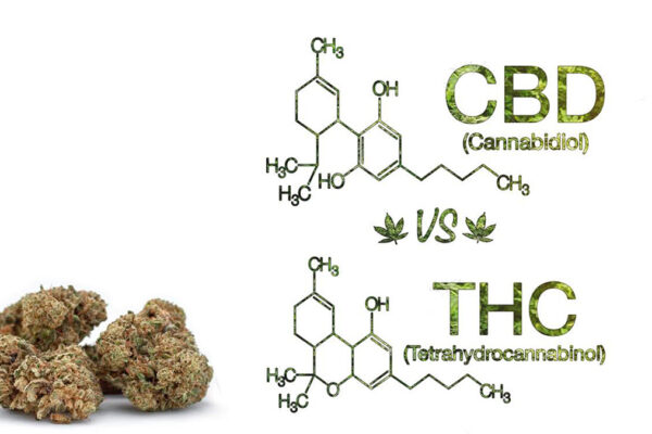 cbd vs thc weed